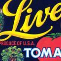Live Oak Tomatoes