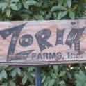 Zoria-side